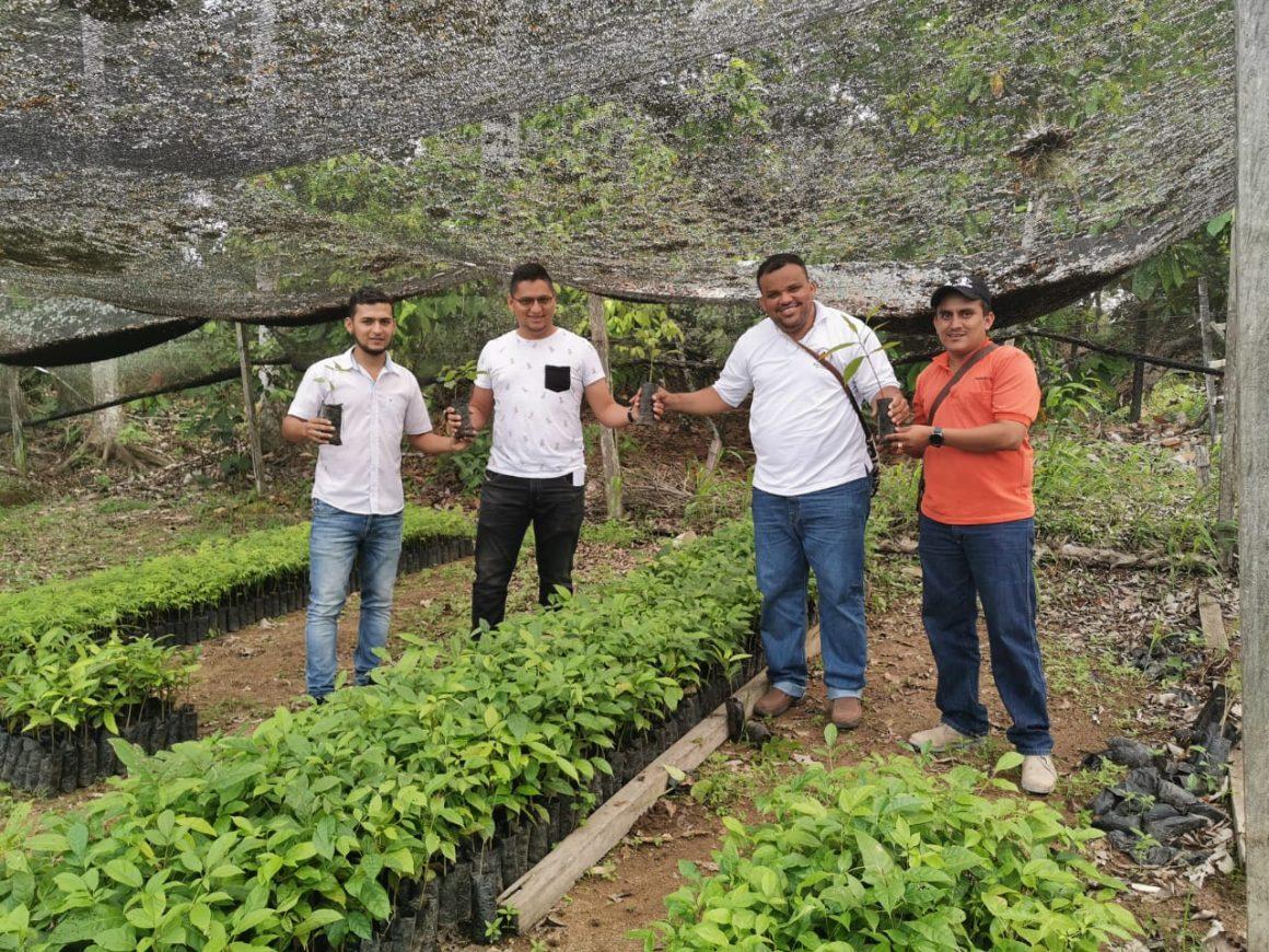 COOPCARIBONA realiza donación de 2500 arboles maderables.